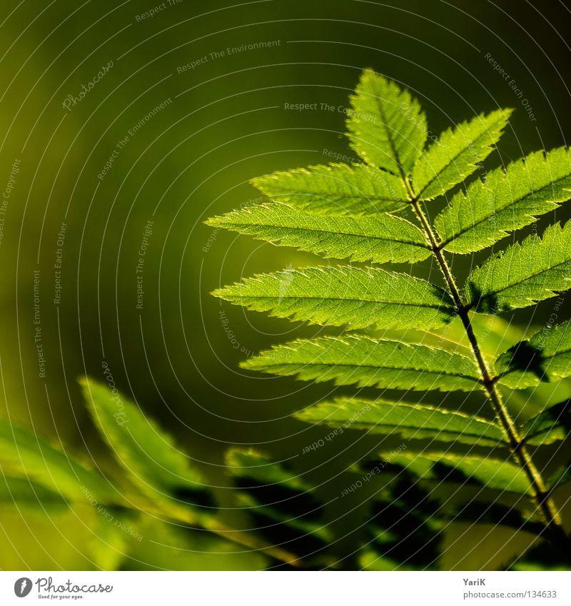 blättrig grün Baum Sommer Wärme Frühling Beleuchtung frisch Hoffnung Wunsch Ast Physik erleuchten Quadrat Zweig Echte Farne Format