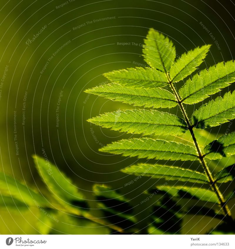 blättrig Sommer Sonnenstrahlen Sonnenlicht Gegenlicht Physik Frühling grün Makroaufnahme Blattgrün Hoffnung Wunsch Beleuchtung erleuchten frisch Format Quadrat