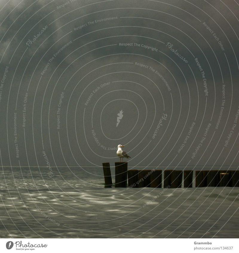 Blitzableiter Wasser Wolken Einsamkeit See Vogel warten Sturm Gewitter Ostsee Möwe verloren Kumulus Buhne