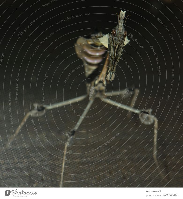 Alien Tier dunkel grau Angst Wildtier stehen bedrohlich Insekt gruselig Zoo eckig Ekel hässlich schaukeln Trägheit Facettenauge