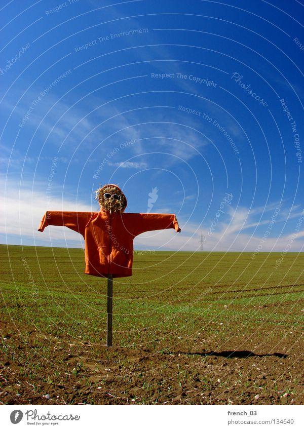 Ich bin schlecht zu Vögeln Himmel Natur grün blau Wolken Einsamkeit Wiese Freiheit Landschaft Gras Holz Linie orange Vogel Angst Feld