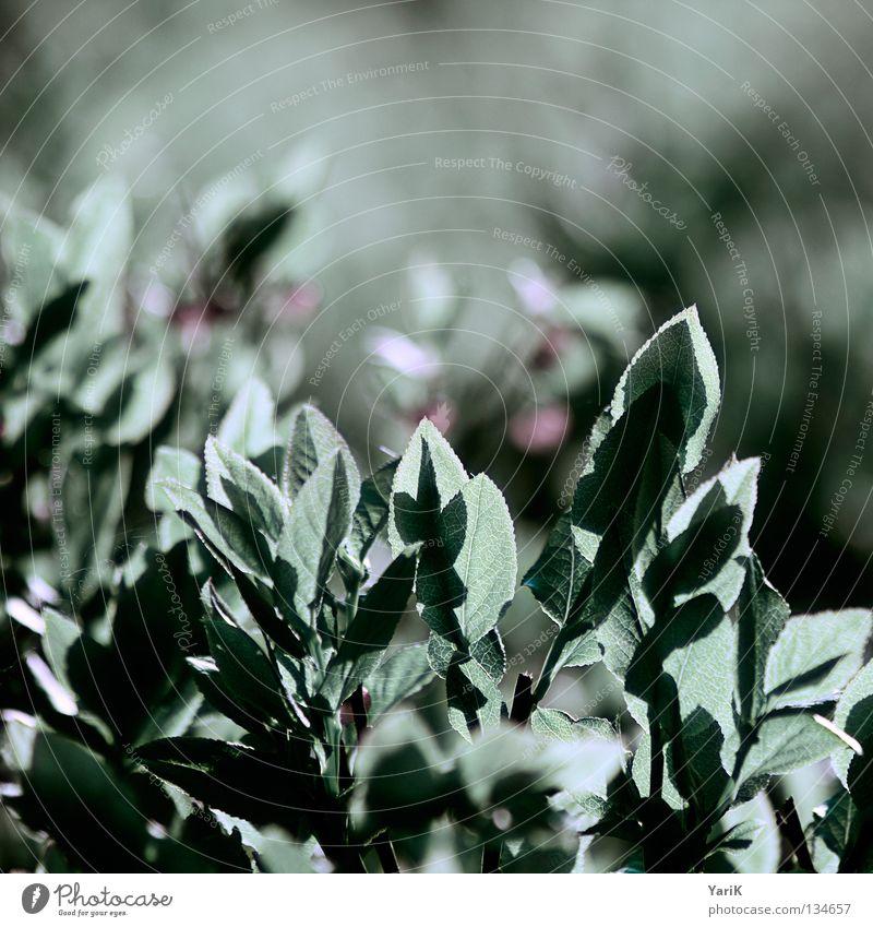 matt grün rot Sommer Blatt Ferne Leben Herbst Frühling Lampe Beleuchtung Sträucher Spitze Ast Punkt erleuchten türkis