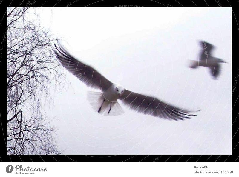 """""""Flug"""" Natur Tier Herbst Freiheit Vogel fliegen Luftverkehr Flugzeuglandung Ostsee Möwe Ware"""