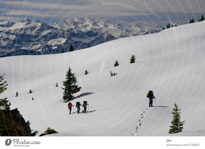 Spuren im Schnee II Schneeschuhe Ferien & Urlaub & Reisen wandern Tanne Kanton Bern Berner Oberland unterwegs Schneeberg Wildnis Blüemlisalp unberührt