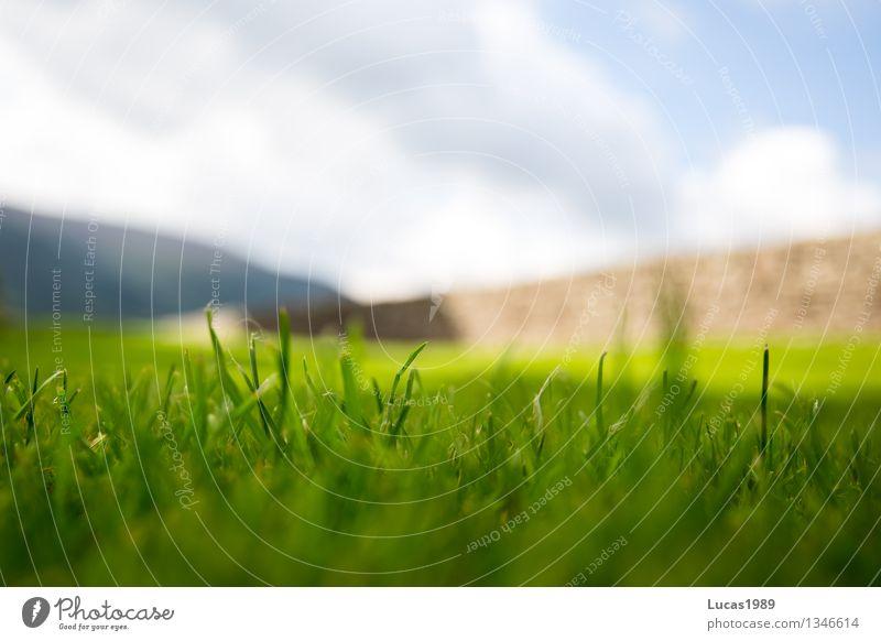 Gras grün Umwelt Natur Landschaft Himmel Schönes Wetter Pflanze Garten Park Wiese Hügel Berge u. Gebirge Mauer Wand blau grau schwarz Wachstum Farbfoto