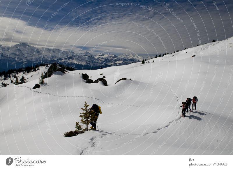Spuren im Schnee IV Natur Ferien & Urlaub & Reisen Schnee Berge u. Gebirge wandern mehrere Sportmannschaft Alpen Aussicht Tanne unterwegs Alm Wildnis Kanton Bern Schneeschuhe Schneeberg