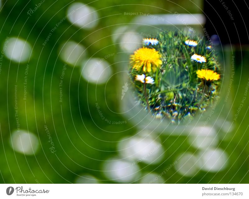 Welt in der Linse Blume Wiese Gänseblümchen Gras Halm grün gelb Frühling Sommer Wachstum Erholung Lowenzahn Wildtier Lupe Glas weis flower Erde world white