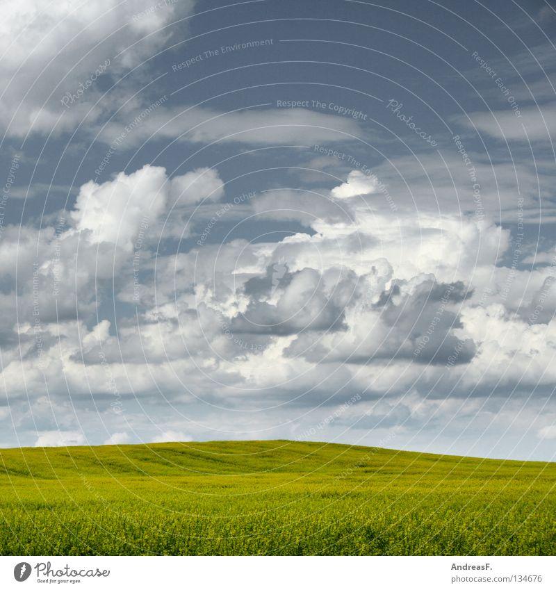 blühende Landschaften Himmel Natur Sommer Wolken gelb Frühling Blüte Feld Energiewirtschaft Schönes Wetter Blühend Landwirtschaft Bioprodukte ökologisch