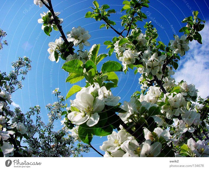 Neustart Natur Ferien & Urlaub & Reisen Pflanze grün weiß Blume Frühling Holz Frucht Luft Idylle Blühend Ast Baumstamm Sehnsucht Zweig