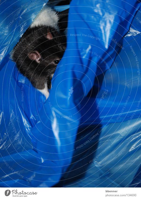 Versteckspiel II blau weiß schwarz gefährlich Suche bedrohlich Neugier Ohr Fell verstecken Säugetier Pfote Vorsicht finden Müllbehälter Plastiktüte