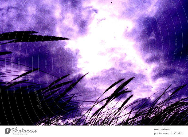 Sonnenpunkt Himmel Wolken Gras Küste Stranddüne