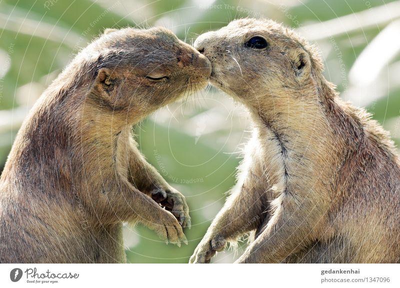 is this love? Tier Fell Pfote 2 Liebe kuschlig Frühlingsgefühle Tierliebe Verliebtheit Romantik Kuss küssen Valentinstag Farbfoto Außenaufnahme Tag Tierporträt