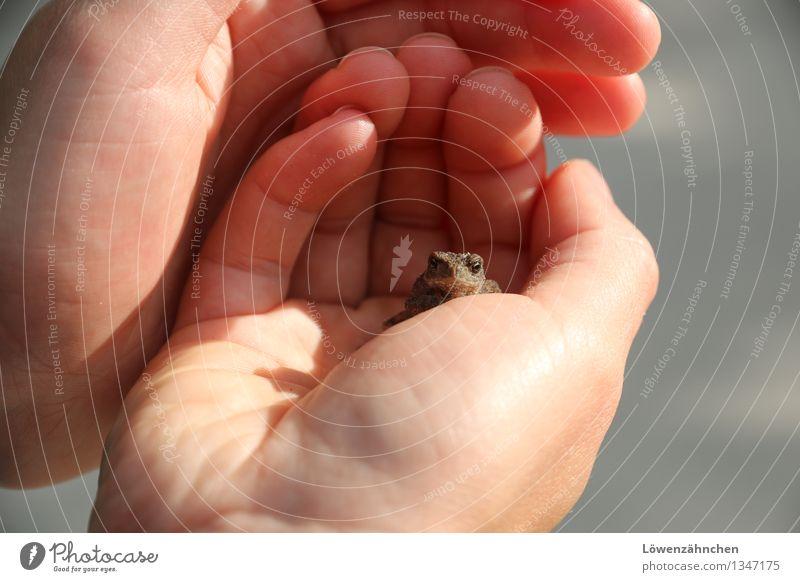 Bist du es, mein Prinz? Hand Finger Frosch Kröte 1 Tier beobachten berühren entdecken sitzen warten klein natürlich Neugier niedlich braun gold grau rosa