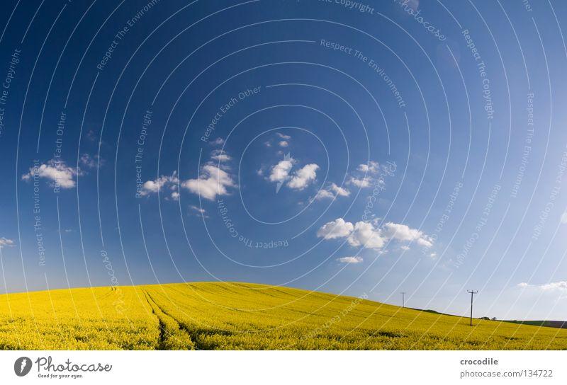 raps # 15 Himmel Wolken gelb Frühling Freiheit Feld groß Horizont Elektrizität Streifen Stengel Blühend Amerika Bayern Schönes Wetter Strommast