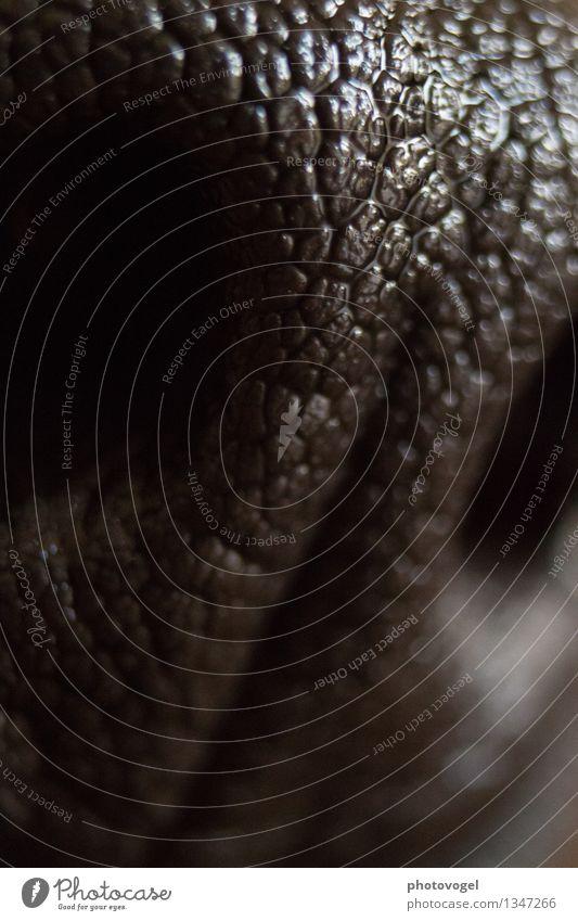 Sinneskraft Tier Haustier Hund 1 atmen glänzend nass schwarz Nase Nasenloch Geruch Strukturen & Formen Schwarzweißfoto Nahaufnahme Detailaufnahme Makroaufnahme