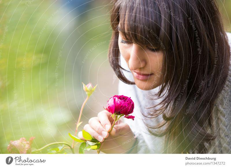 Duft der Rose Mensch Jugendliche Pflanze grün Sommer Junge Frau weiß Blume Hand rot Tier 18-30 Jahre Gesicht Erwachsene gelb Blüte