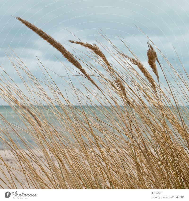 Ostsee Himmel Ferien & Urlaub & Reisen Pflanze blau Wasser weiß Meer Erholung Landschaft Wolken ruhig Ferne Strand gelb Gesundheit Freiheit