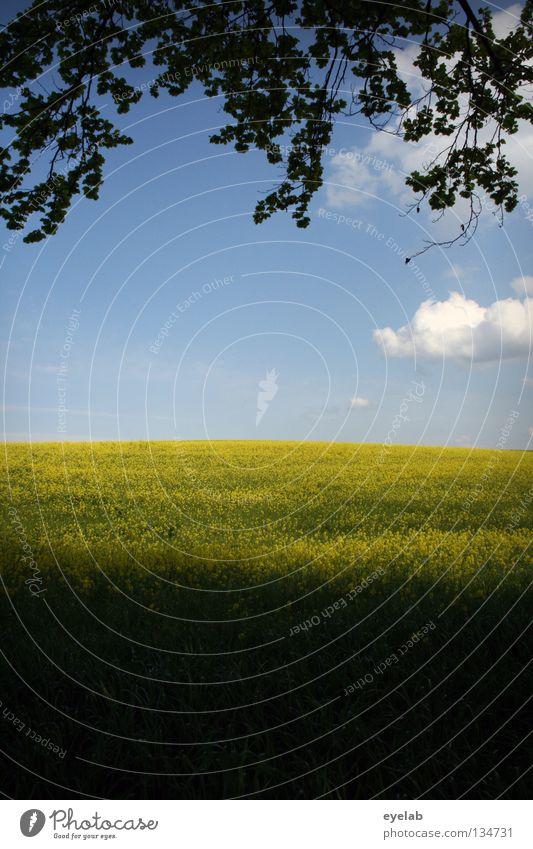 Rapsodie in gelb (2. Akt) Wolken Luft Freizeit & Hobby Ferien & Urlaub & Reisen Horizont Ferne Feld Rapsöl Pflanze Bauernhof Landwirtschaft Naturwuchs Wachstum