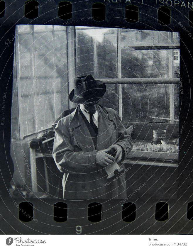 Mann in einer Gärtnerei Garten maskulin Erwachsene Hand Pflanze Fenster Mantel Krawatte Hut Glas wählen drehen Konzentration Rätsel Gewächshaus Fensterscheibe