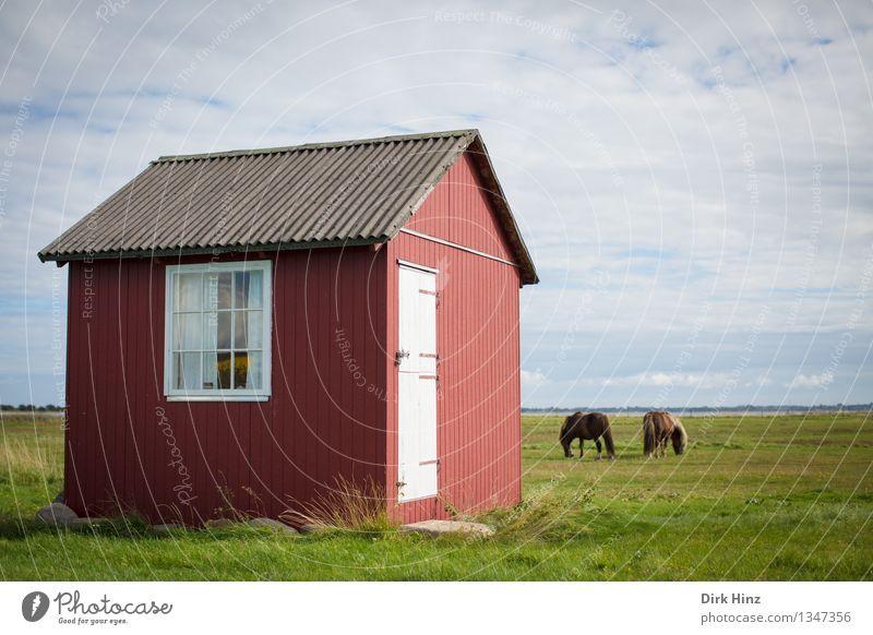 Strandhaus auf Ærø III Himmel Natur Ferien & Urlaub & Reisen alt grün Sommer Erholung Einsamkeit Landschaft Ferne Fenster Umwelt Wiese Küste braun Horizont