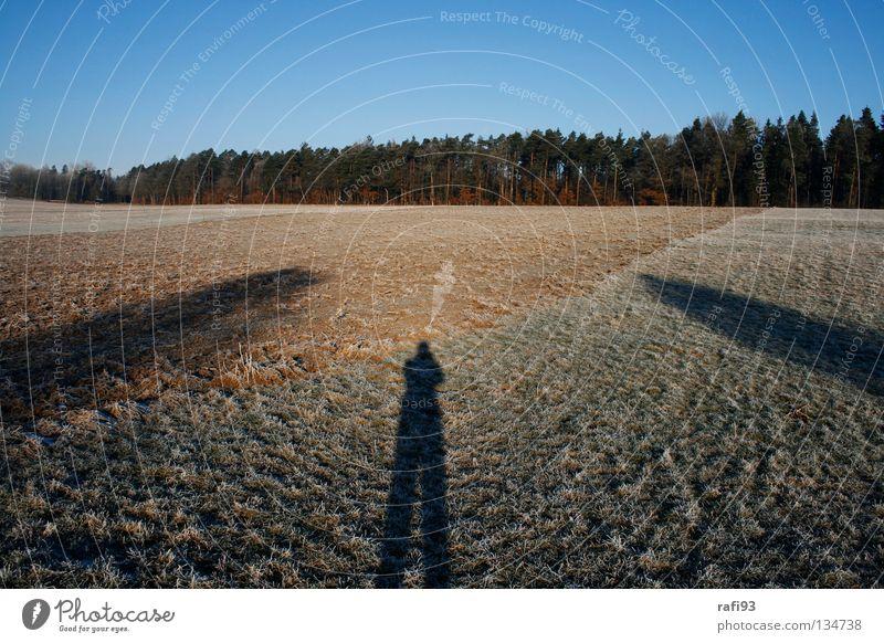Ich...und zwei Bäume Himmel Baum blau Wald Gras Frühling braun Feld Frost i Raureif