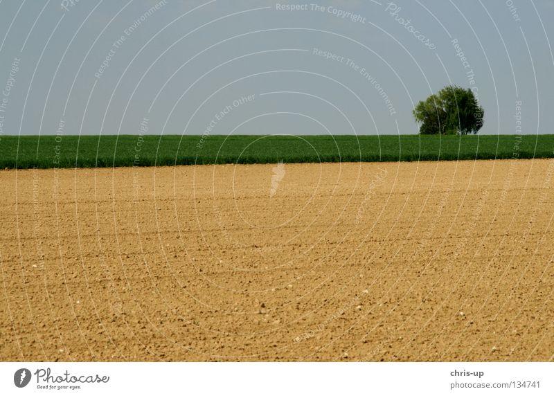 Natur pur schön Himmel Baum grün blau Landschaft braun Feld rein Bauernhof Idylle Landwirtschaft Schönes Wetter Ackerbau ökologisch
