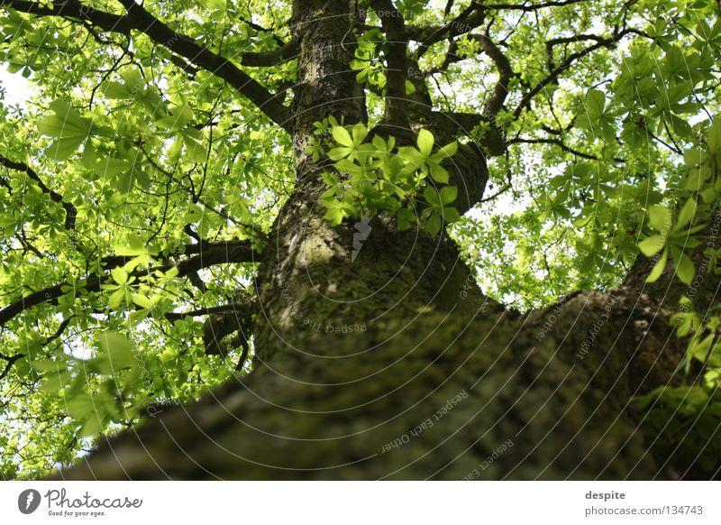 Flüchtiger Blick nach oben Natur Baum Amerika Baumkrone Trier