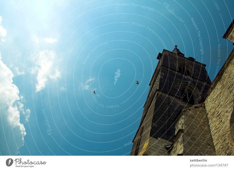 Turmfalken Himmel blau Wolken Religion & Glaube Vogel Tierpaar Architektur hoch paarweise Niveau Spitze Kirche Christentum Gotik steil