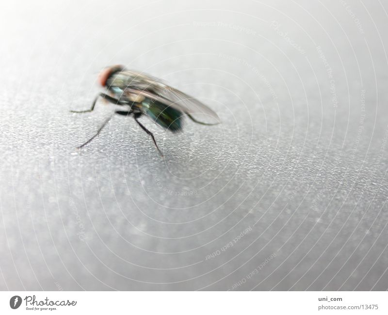 flotte Fliege Bewegung Fliege Flügel Insekt