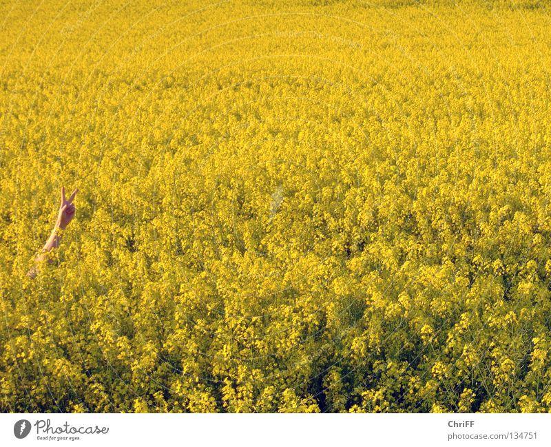 Peace in Rapsfeld II Hand Frieden gestikulieren Feld gelb Frühling Blühend Natur Arme