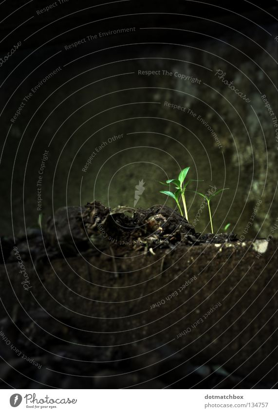 New life alt Pflanze Leben Frühling dreckig Brücke neu Wachstum gedeihen Jungpflanze faulig