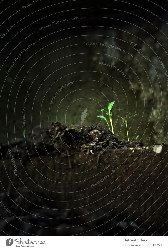 New life Leben neu Pflanze Jungpflanze faulig Wachstum gedeihen Frühling new life alt Brücke dreckig