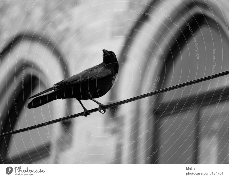 Edgar schwarz Tier dunkel Wand Fenster grau Mauer Gebäude Vogel sitzen trist Kabel beobachten geheimnisvoll gruselig historisch