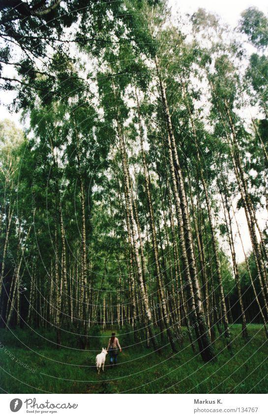 9 Stunden Frau Natur weiß grün Blatt Einsamkeit Wald Hund verloren Polen Sumpf Birke verirrt Zecke