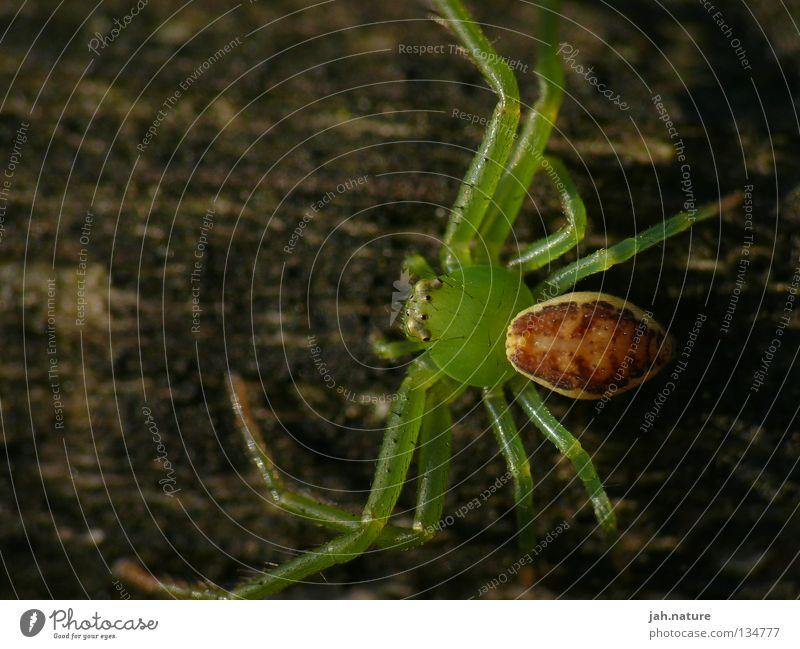 Faszination Insekten Natur grün schön wandern Spinne Makroaufnahme