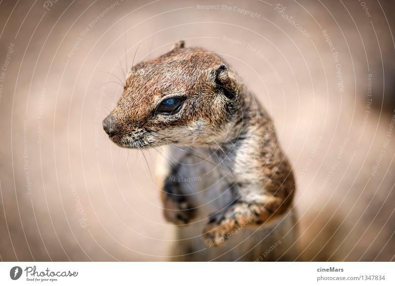 suchen und finden Tier natürlich klein braun Wildtier frei ästhetisch beobachten Neugier Ziel nah lecker Suche entdecken hören Mut