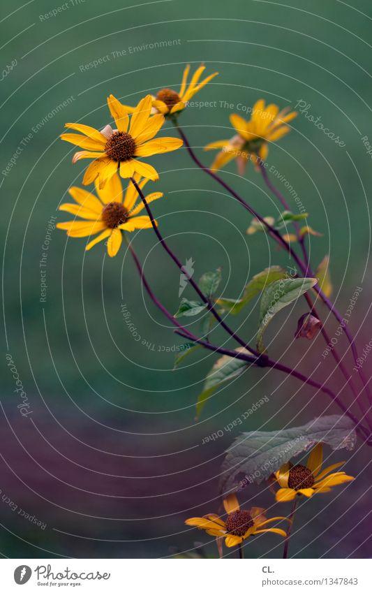 blümchenfoto Natur grün Blume Umwelt gelb Blühend violett