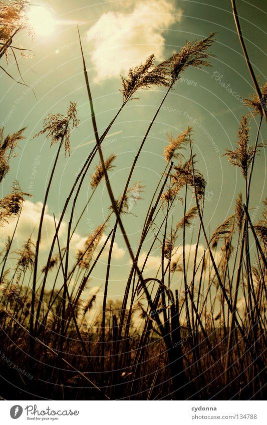 Im Wind stehn Gesundheit Freizeit & Hobby Wiese Frühling schön Gras Halm lang schmal Wolken Physik Gegenlicht Richtung Windrichtung taumeln Botanik Sommer
