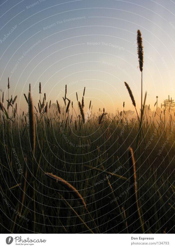 05:05 a.m. Natur grün Sommer Einsamkeit ruhig Wiese Gras Feld Wildtier Nebel Sträucher Idylle Rasen Müdigkeit Halm Tau