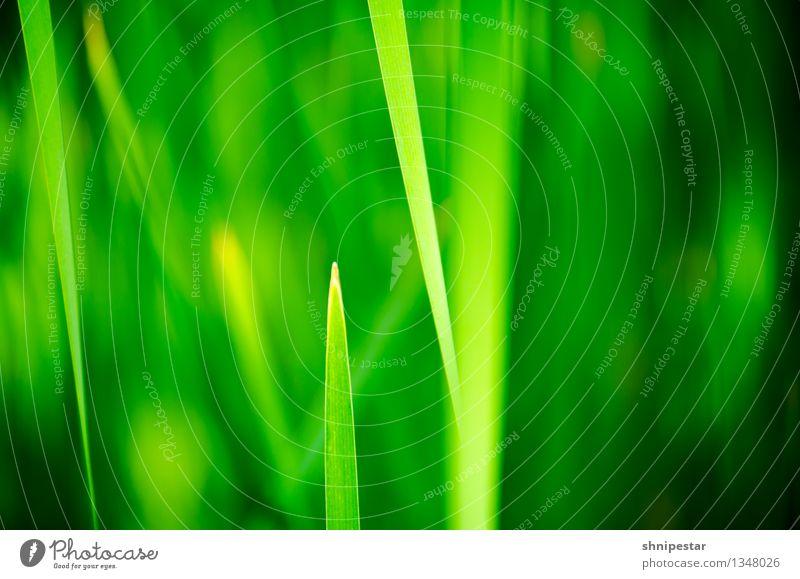 Desktop background OS X El Capitan Computer Notebook Bildschirm Software Kunst Medien Natur Pflanze Frühling Klima Schönes Wetter Gras Sträucher Blatt Urwald