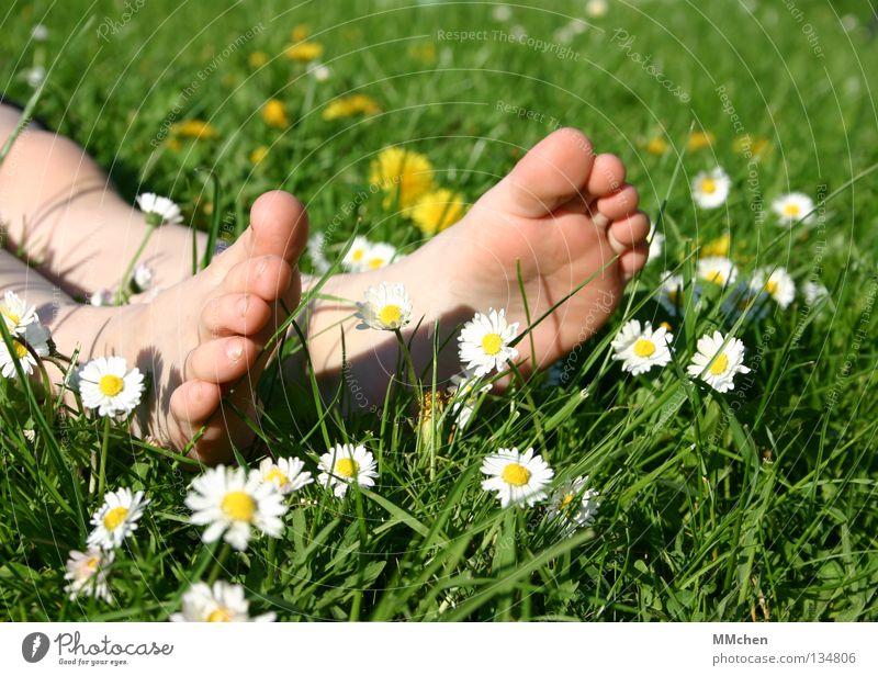 Fußpflege Gras Wiese Feld mehrfarbig Sommer Blume Gänseblümchen Stengel Halm Erholung ruhen schlafen Sonnenbad Zehen Fußsohle Barfuß Wellness Pflanze Vorgarten