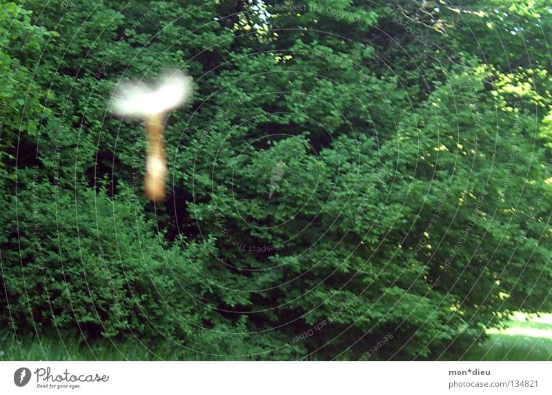 T Baum grün Sommer Wald Wiese fliegen Vergänglichkeit Löwenzahn