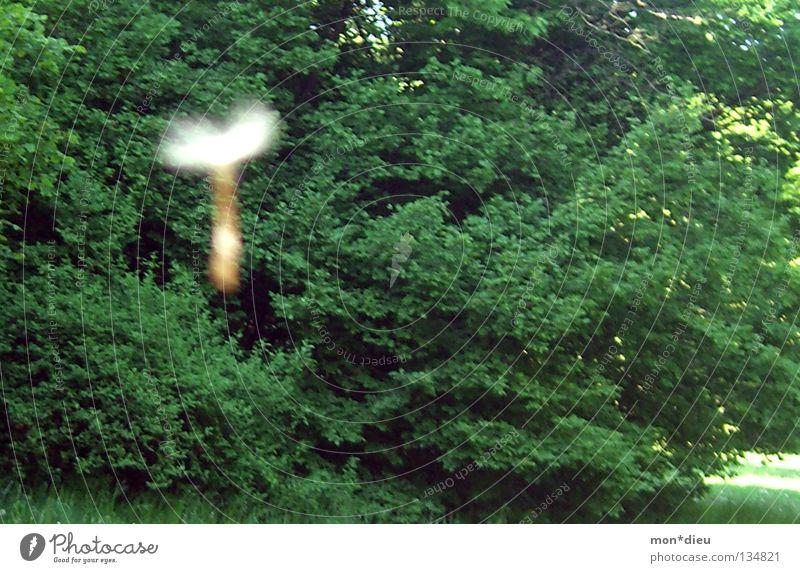 T Löwenzahn Wald Sommer grün Baum Wiese Vergänglichkeit fliegen Außenaufnahme