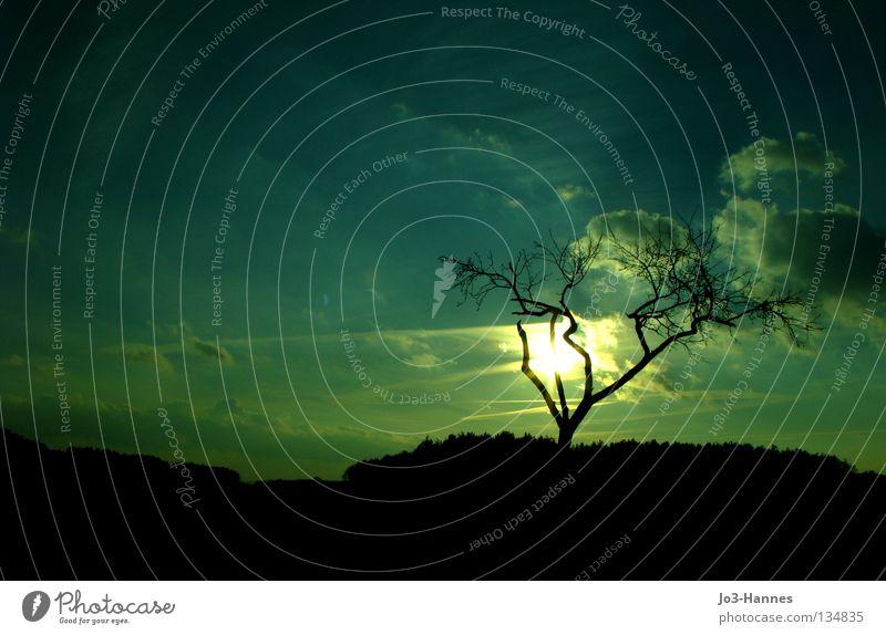 Sonnenschein atomar Sonnenuntergang Wolken Baum Geäst Silhouette türkis Gift Atom Strahlung Gegenlicht Farbe Himmel Ast Krüppel