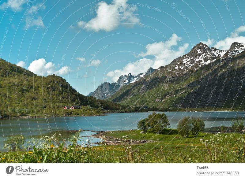Norwegen Natur Ferien & Urlaub & Reisen Pflanze blau grün Sommer weiß Baum Sonne Wolken ruhig Tier Ferne Berge u. Gebirge Bewegung natürlich