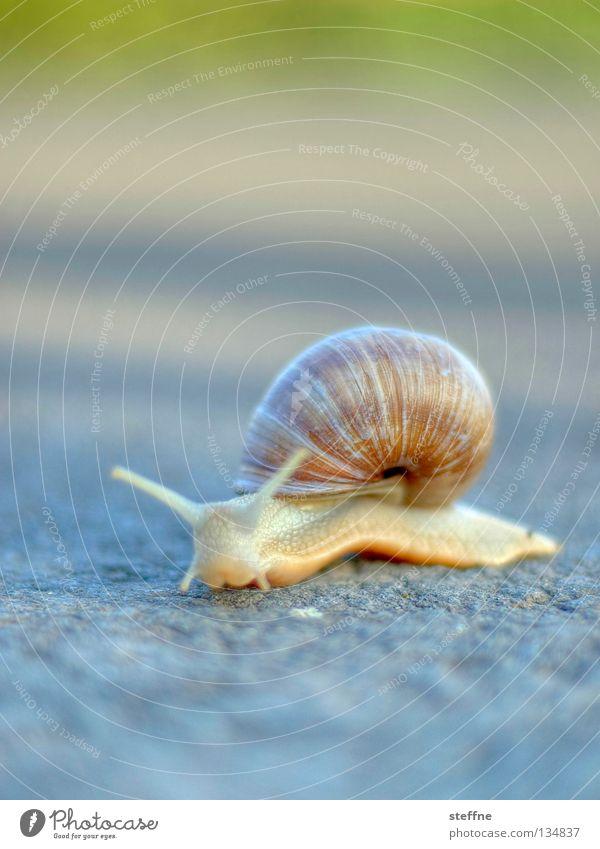 Geile Schnecke Natur weiß Bewegung Wege & Pfade Ernährung Gastronomie Frankreich krabbeln Fühler langsam schleimig Schneckenhaus Franzosen Schleim