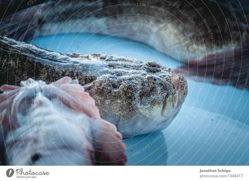 Fischers Fritze fischt frische Fische IX Umwelt Tier Tiergruppe blau Tod schuldig Völlerei gefräßig verschwenden Fischereiwirtschaft verkaufen töten Hafen eng