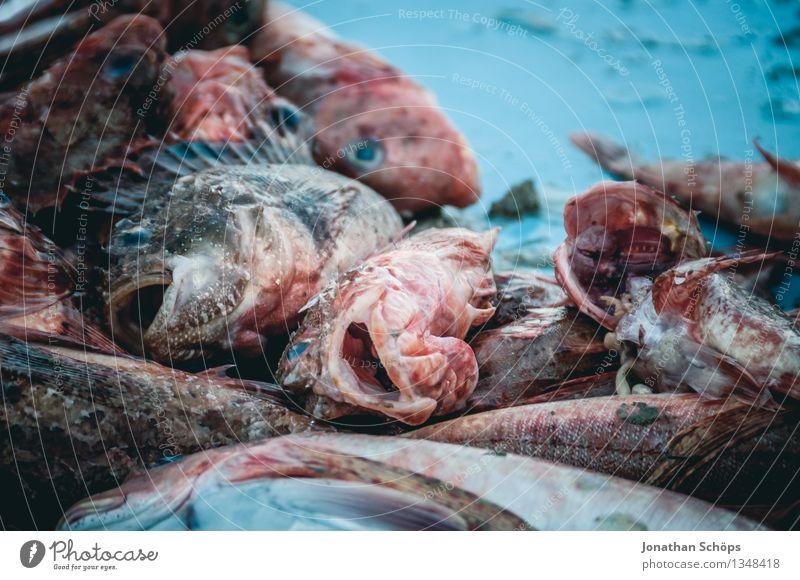 Fischers Fritze fischt frische Fische VIII Umwelt Tier Tiergruppe blau Tod schuldig Völlerei gefräßig verschwenden Fischereiwirtschaft verkaufen töten Hafen eng
