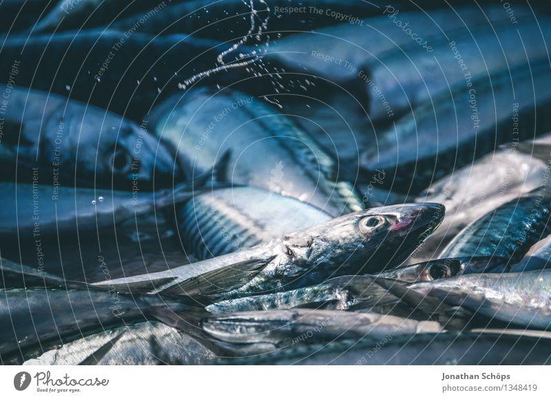 Fischers Fritze fischt frische Fische VI Umwelt Tier Tiergruppe blau Tod schuldig Völlerei gefräßig verschwenden Fischereiwirtschaft verkaufen töten Hafen eng