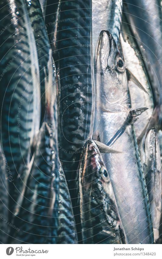 Fischers Fritze fischt frische Fische IV Umwelt Tier Tiergruppe Schwarm saftig blau Tod schuldig Völlerei gefräßig verschwenden Fischereiwirtschaft verkaufen